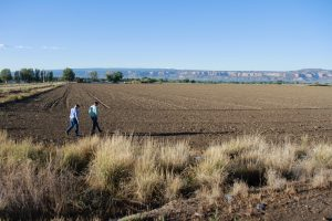 Mark Harris and Luke Gingerich stand in a fallowed field near Grand Junction, Colorado