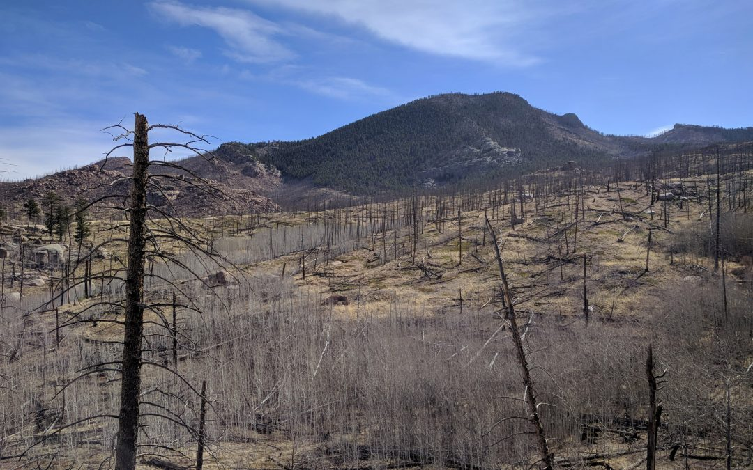 The Inextricable Link Between Forests, Fires and Water