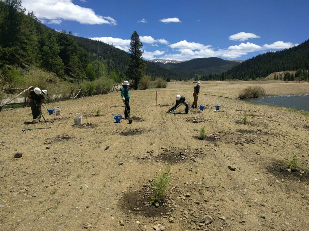 The Rocky Mountain Youth Corps helps restore habitat along Swan River.