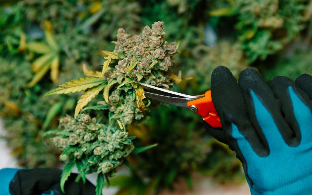 Pueblo County pot growers face steep learning curve on water rules