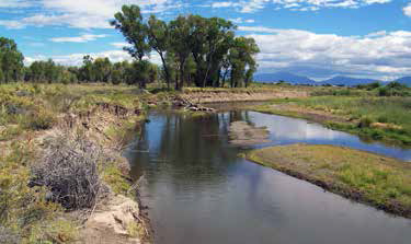 Rio Grande Restoration Flows Forward
