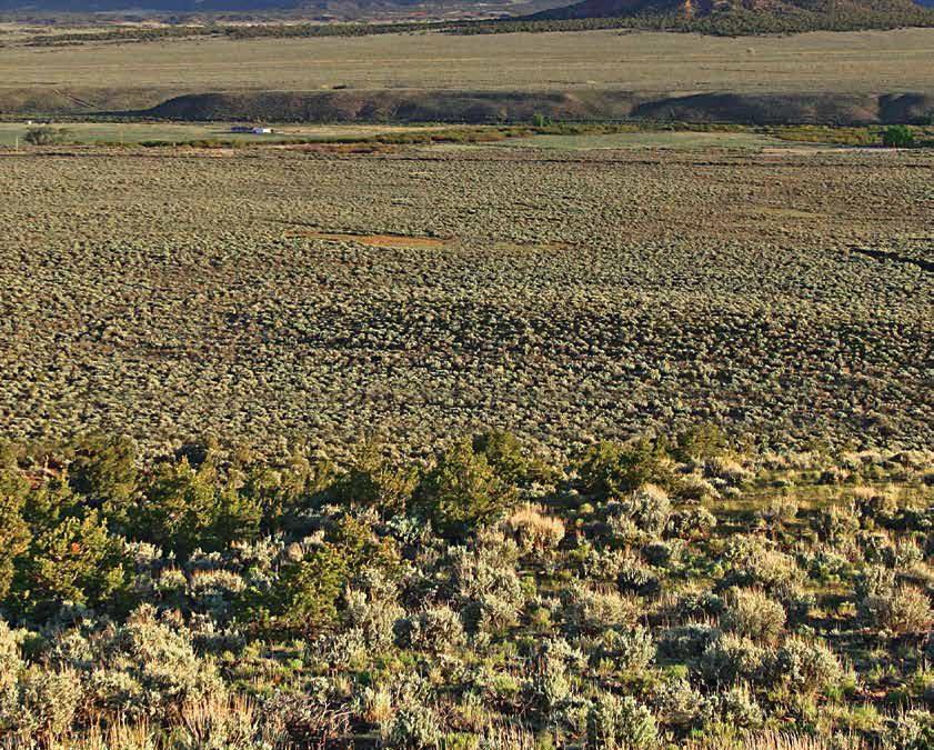The Resilient Rio Grande Basin