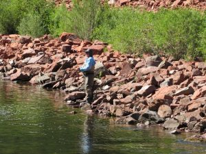 Angler on the Roaring Fork River upstream of Basalt in Pitkin County. West Slope voters said yes to millions in new taxes for the Colorado River District. Credit: Jerd Smith, Fresh Water News