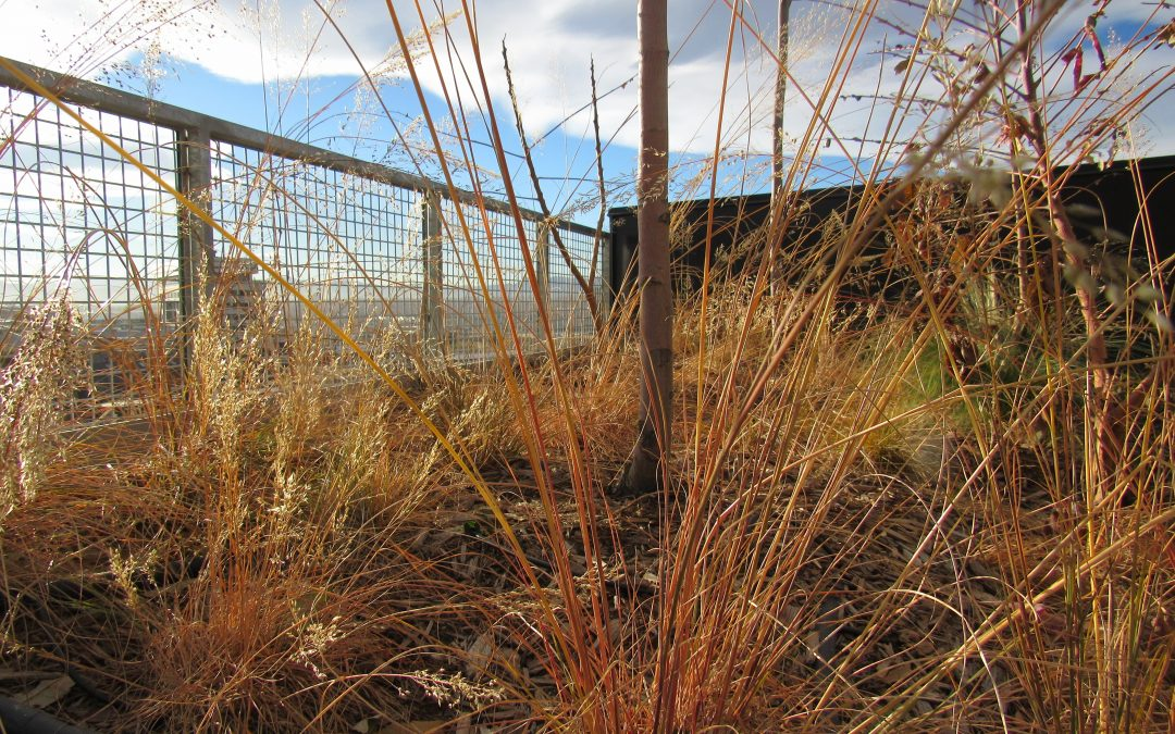 Denver's new green roof law has some surprising implications for water