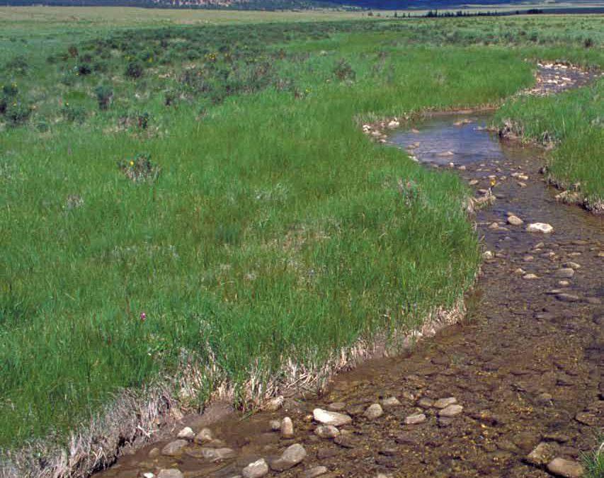 Simply Irreplaceable: Wetlands