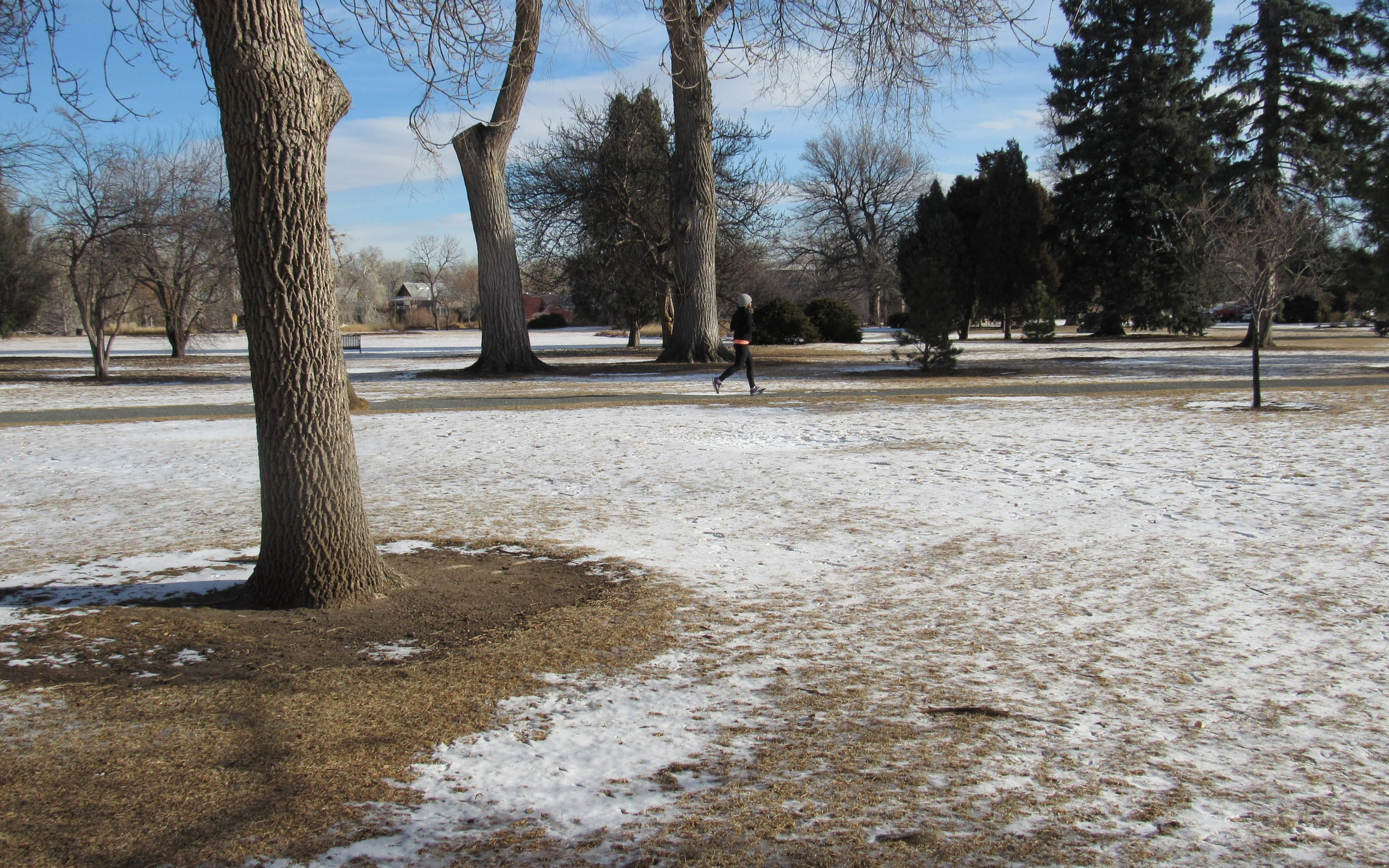 A woman jogs in Denver's City Park Jan. 23, 2019. Though statewide snowpacks have improved, the metro area actually slipped back into drought in December due to a lack of snow. Credit: Jerd Smith