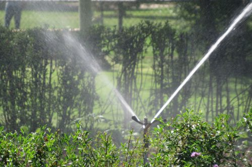 A sprinkler waters the gardens at Washington Park, one of the neighborhoods whose lead service lines pose a risk to residents. July 12, 2019. Credit: Jerd Smith
