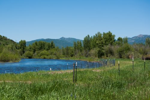 A restorative area on the Yampa River where groups are working to plant trees on the land surrounding the river in hopes of providing natural shade and coverage for the river in the future. June 28, 2019. Credit: Callie Rhoades, CU News Corps, The Water Desk