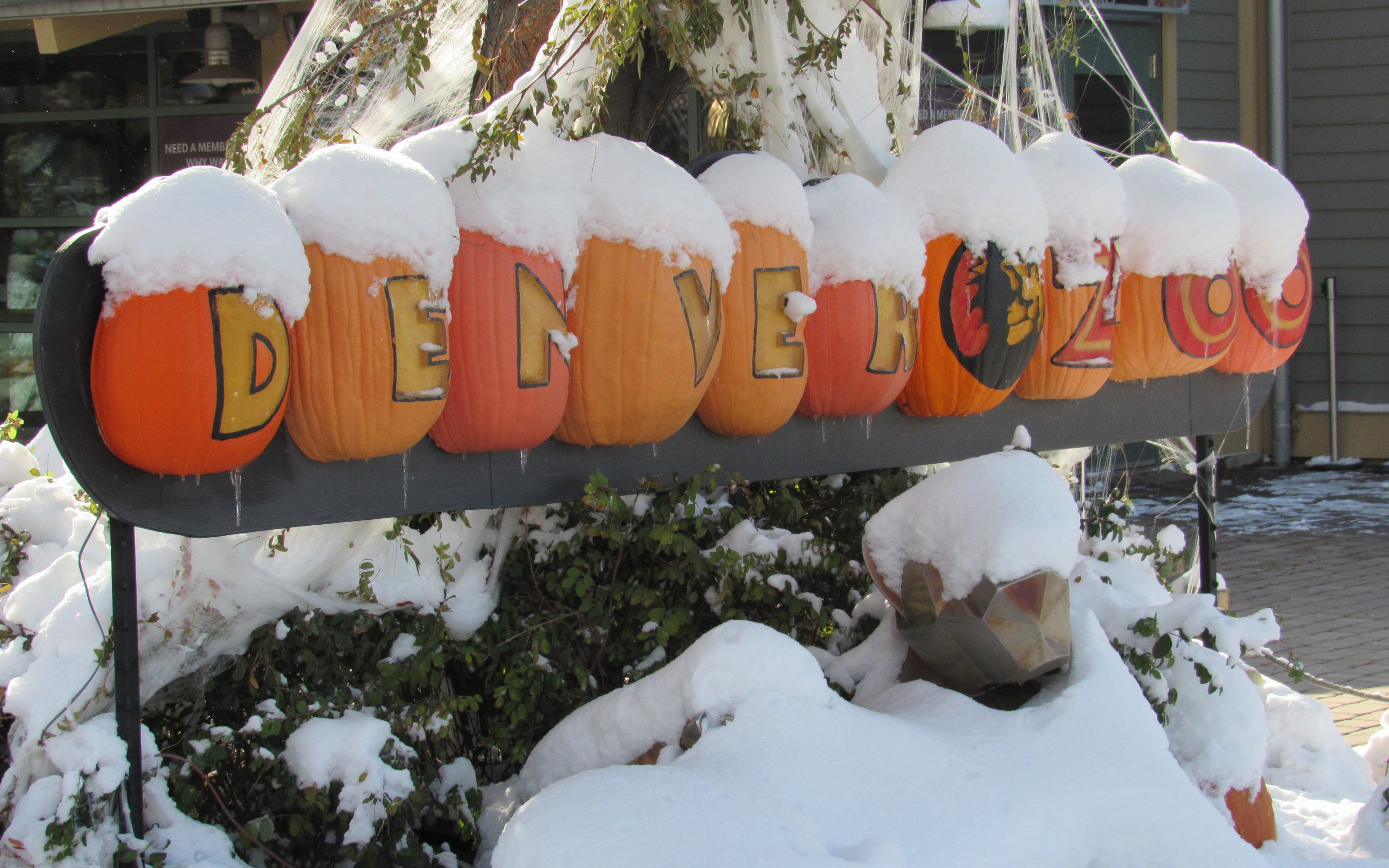 Snow-covered pumpkins welcome visitors to the Denver Zoo on Oct. 29, 2019. The Zoo is one of the agencies that has installed Gutter Bins to filter its stormwater. Credit: Jerd Smith