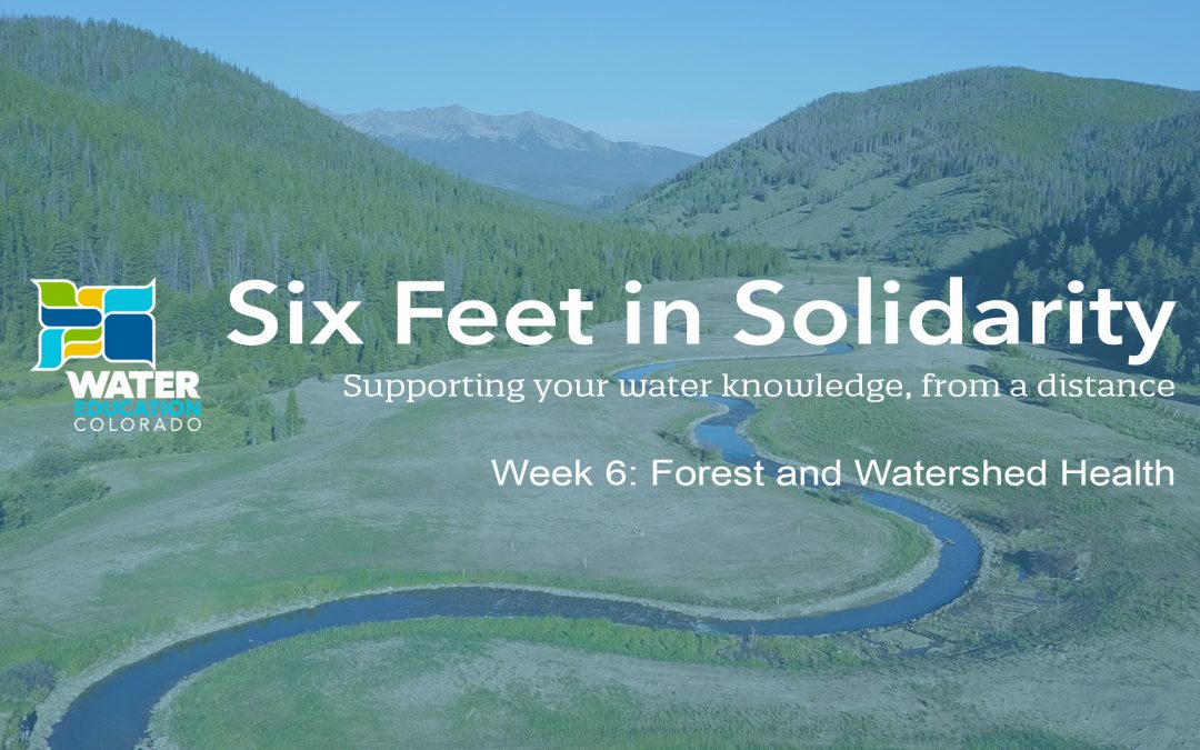 Six Feet in Solidarity – Week 6: Forest and Watershed Health