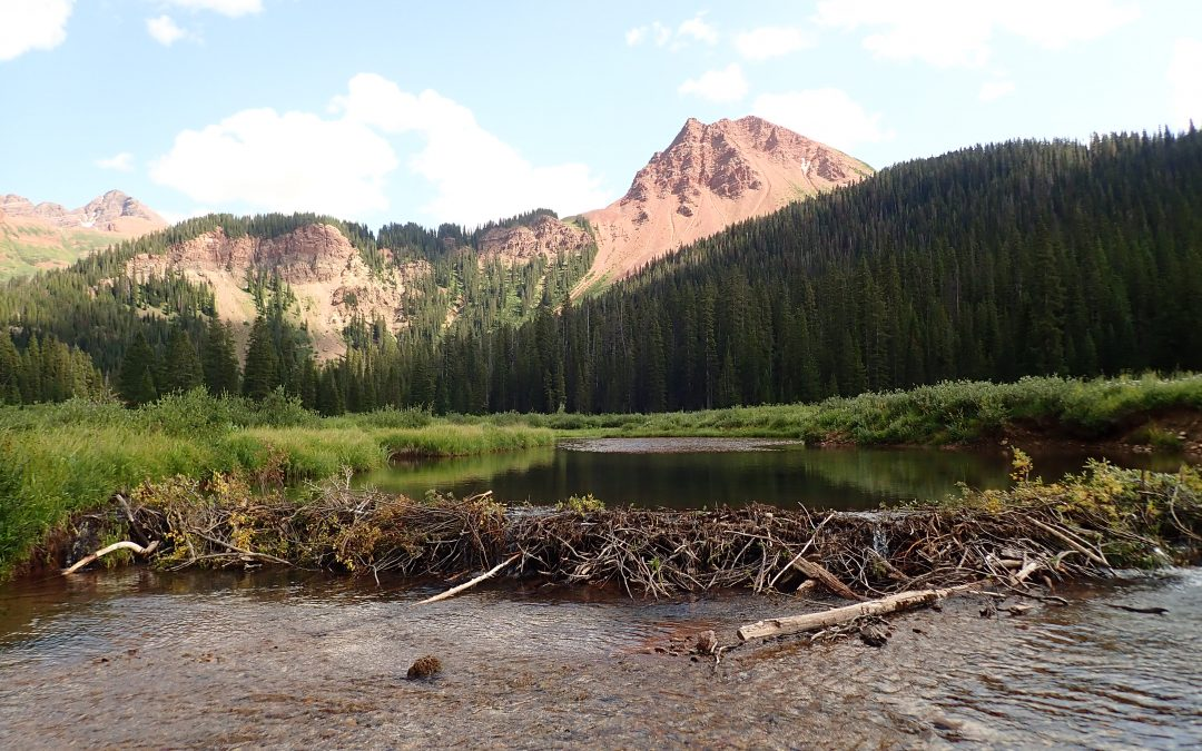 Scientists: Beavers latest tool to emerge in rebuilding drought-stricken streams